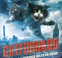 Catfurnado Will Deliver Pussy at a Hundred Miles an Hour!