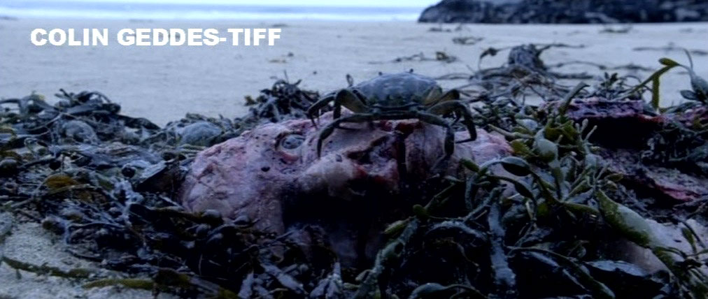 TIFF 2011: Midnight Madness Image Tease (click for larger image)