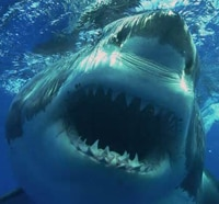 Real-Life Jaws Attacks in California - Insane Video!