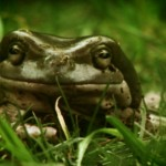 FROG 150x150 - Exclusive: Things Get Ruff in This New Horror Short