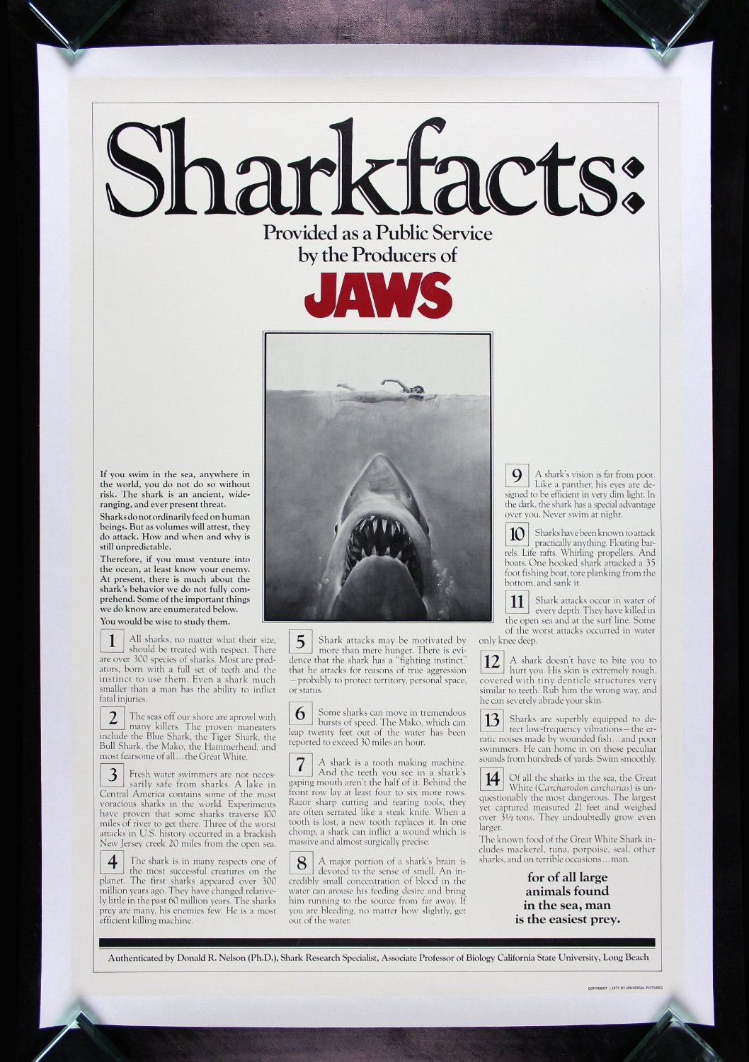 Jaws Vintage - Backcountry - Bears vs. Sharks: What's Scarier?