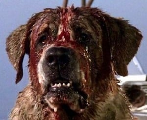 dog - Stephen King's Cujo Being Remade as C.U.J.O.; First Details
