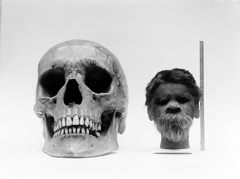 Shrunken head compared with normal human skull - How to Make a Shrunken Head