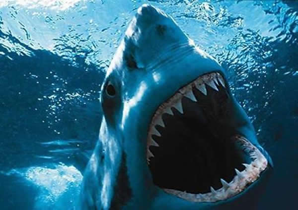 shark 3 - Mandy Moore Finds Terror In the Deep This Summer