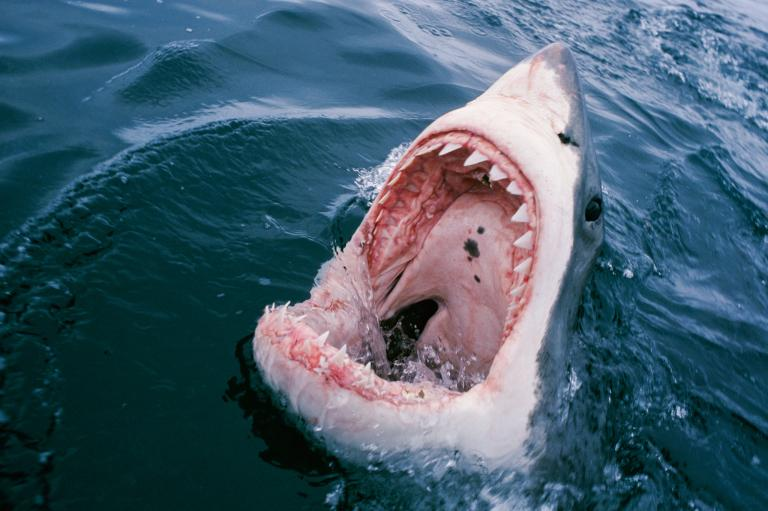 sharkattackpew adapt 768 1 - Don't Go Into the Water! 5 Entertaining Shark Films Besides Jaws