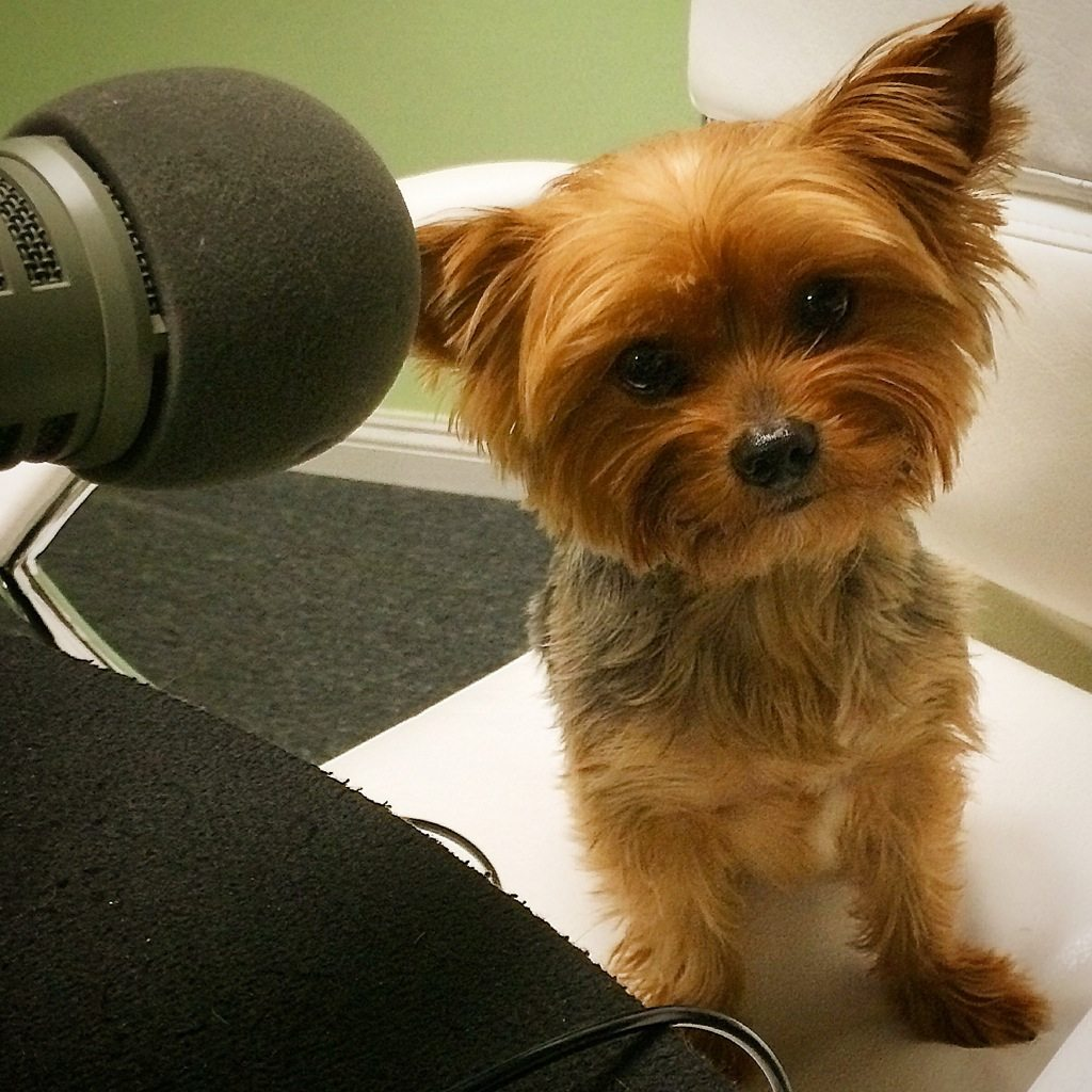 Arwen - The Movie Crypt's Save the Yorkies Marathon Is Live! Donate Now!