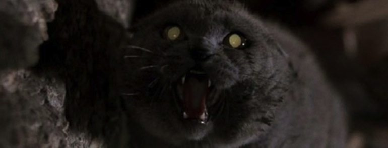 church the cat pet sematary - Top 6 of the Scariest Animals in Horror Movies