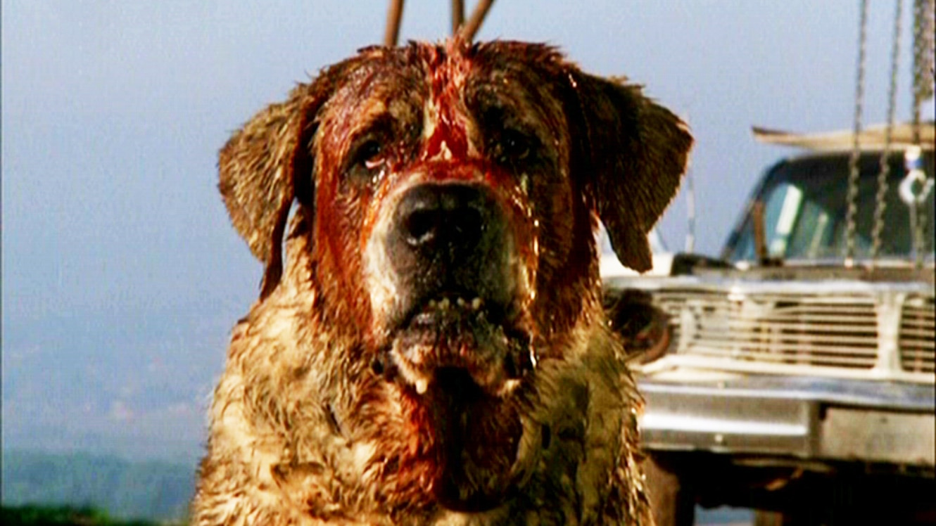 stephen king announces cujo appears in the dark tower