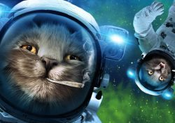 Stoner Cats in Space