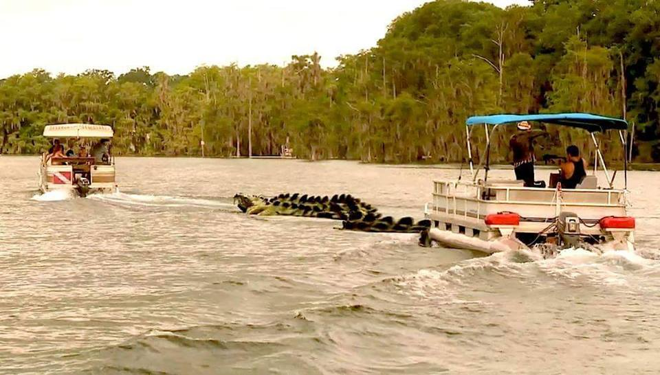 cobragator 2 - Exclusive Images of the Cobragator in Action!