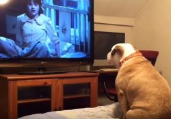 The Conjuring Dog