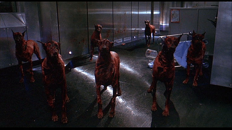 zombiedogsresidentevil - There Was Supposed to Be a Zombie Dog Sequence in Snyder's Dawn of the Dead