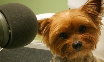 Arwen small 400x240 - Help The Movie Crypt to Save The Yorkies AGAIN!