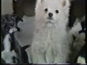 WHYT Radio Puppies Commercial Screenshot 1 336x252 - Go Pre-Evil Dead with Scott Spiegel and Bill Ward's Super 8 Shorts - AVAILABLE NOW! Must Watch Videos Right Here!