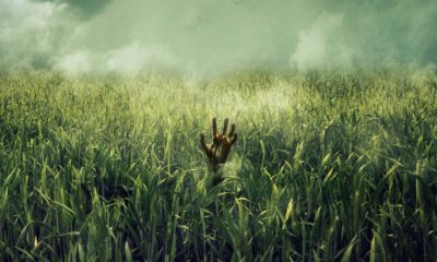 In the Tall Grass poster 400x240 - Fantastic Fest 2019: IN THE TALL GRASS Review - Fits Neatly Into Stephen King's Established Multiverse