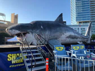 shark week 1 336x252 - #SDCC18: We Have SUCH Sights to Show You