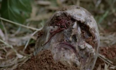 zombie banner 400x240 - ZOMBIE Blu-ray Review - Fulci's Fantasy Island Gut-Muncher Gets a Spit & Polish