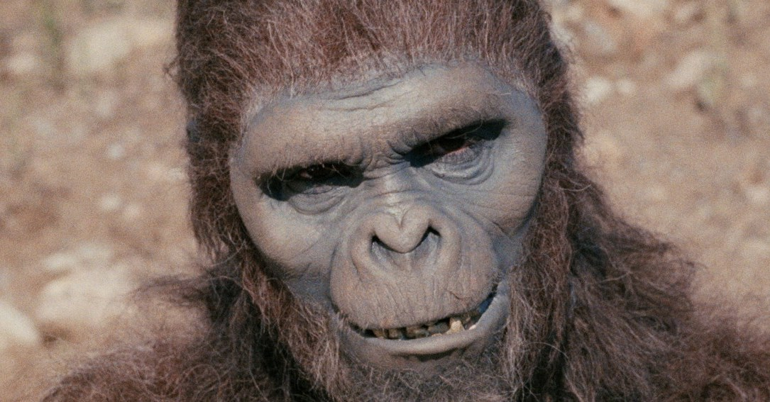 Schlock News 1 - SCHLOCK Blu-ray Review - A Young John Landis Makes a Monkey Movie