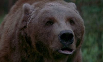 theedgebartthebearbanner1200x627 400x240 - THE EDGE's Bear Attack Scene Still Terrifies and Shocks to This Day