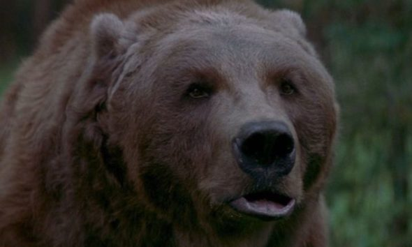 theedgebartthebearbanner1200x627 590x354 - THE EDGE's Bear Attack Scene Still Terrifies and Shocks to This Day