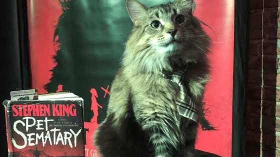 Pet Sematary Cat Banner 560x315 - Video Explores the Art of Cat Wrangling for Movies & TV