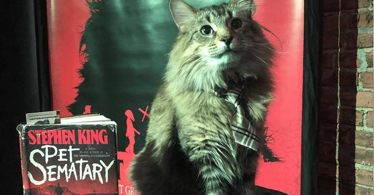 """Pet Sematary Cat Banner - New Yorkers: Win a """"Purrfect"""" Evening Watching PET SEMATARY Surrounded by Cats + Steelbook Giveaway!"""