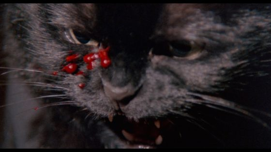 uncanny feat 560x315 - THE UNCANNY Blu-ray Review - Three Tales of Cats Being Cats