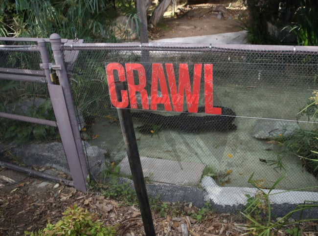 Crawl 19 - Feeding Time! Check Out Images from Press Event for CRAWL at the LA Zoo with Real Alligators