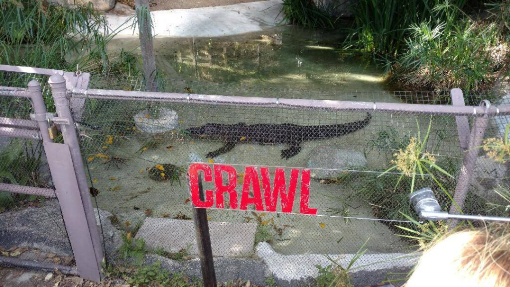 Crawl 4 1024x576 - Feeding Time! Check Out Images from Press Event for CRAWL at the LA Zoo with Real Alligators