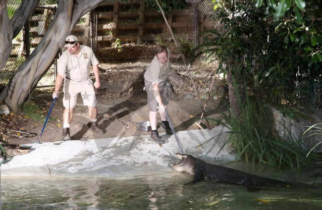 Crawl 9 - Feeding Time! Check Out Images from Press Event for CRAWL at the LA Zoo with Real Alligators