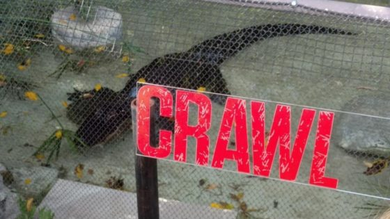 Crawl Banner 560x315 - Feeding Time! Check Out Images from Press Event for CRAWL at the LA Zoo with Real Alligators