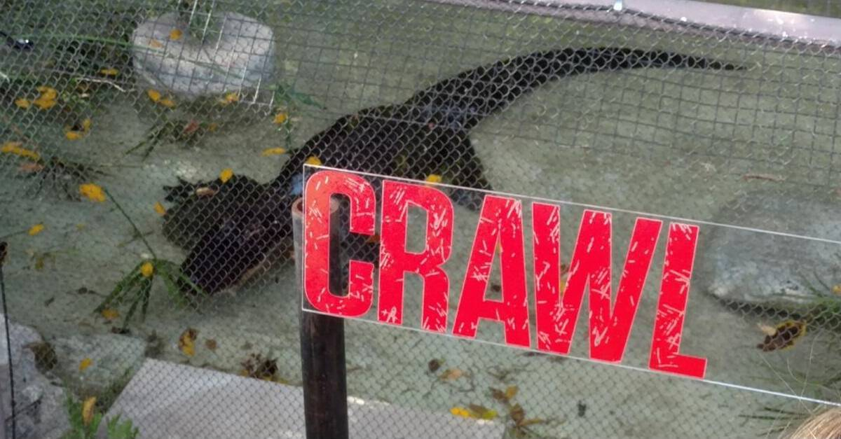 Crawl Banner - Feeding Time! Check Out Images from Press Event for CRAWL at the LA Zoo with Real Alligators