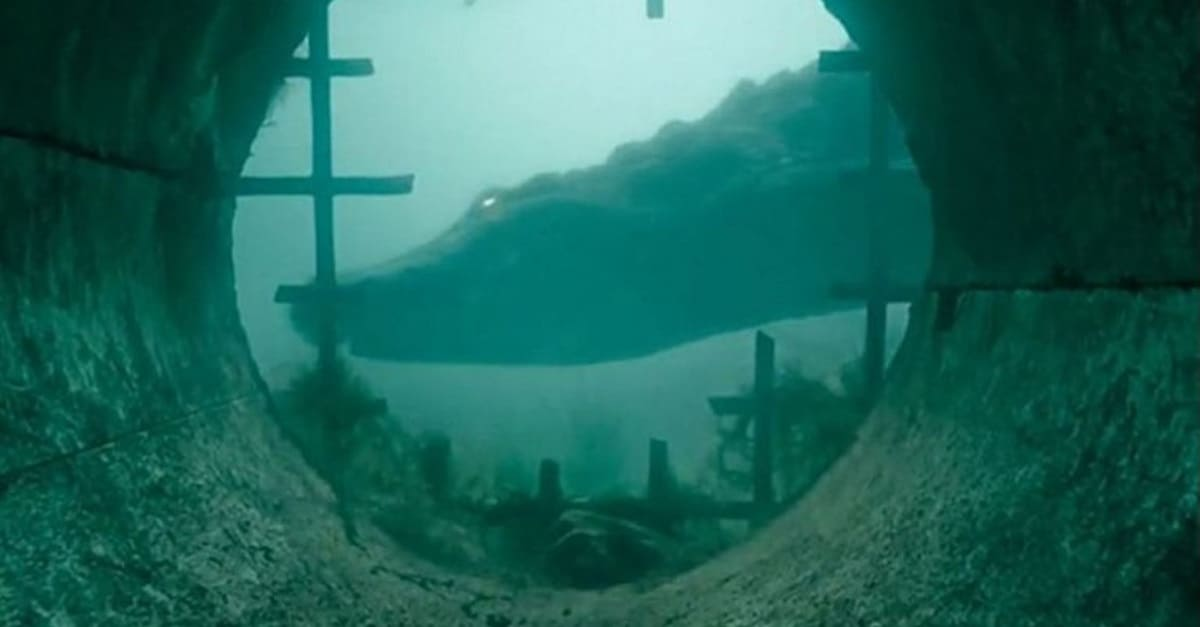 "Crawl banner 1 - CRAWL Review—The Best ""Stay Out of the Water"" Summer Horror Movie Since THE SHALLOWS"