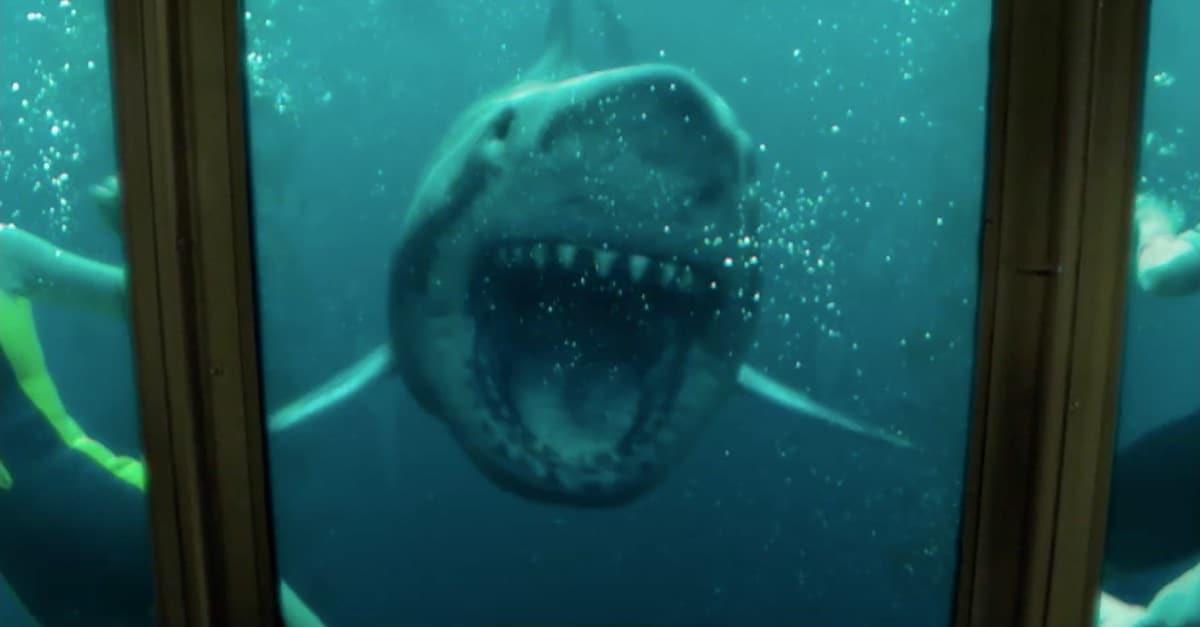 47 meters down uncaged banner - Latest Clip from 47 METERS DOWN: UNCAGED Has Teeth!