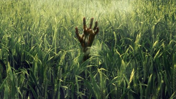 in the tall grass banner 560x315 - Trailer: Stephen King & Joe Hill's IN THE TALL GRASS Arrives on Netflix October 4th