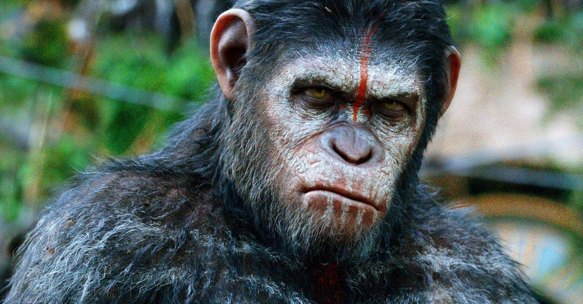 Caesar's Legacy Will Continue in New PLANET OF THE APES - Caesar's Legacy WILL Continue in New PLANET OF THE APES