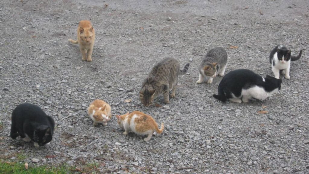 "FeralCat 02a 1024x576 - Feral Cats Raid ""Body Farms"" to Eat Human Corpses"