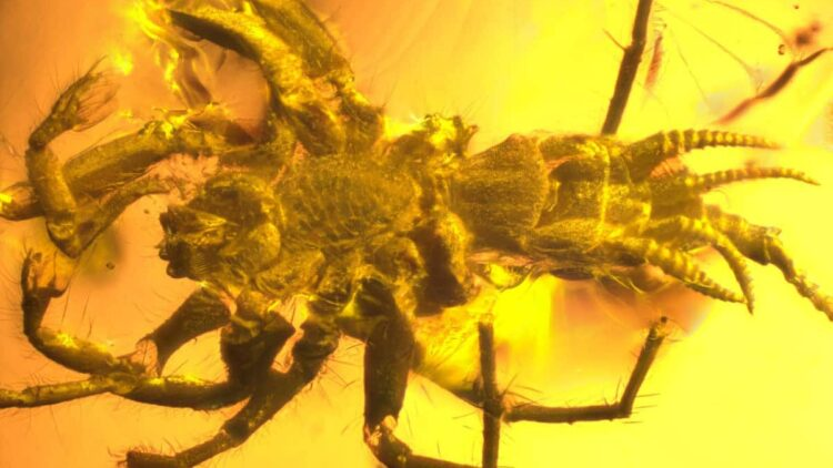 SpiderScorpion featured 750x422 - Spider or Scorpion? This Prehistoric Beast is Both