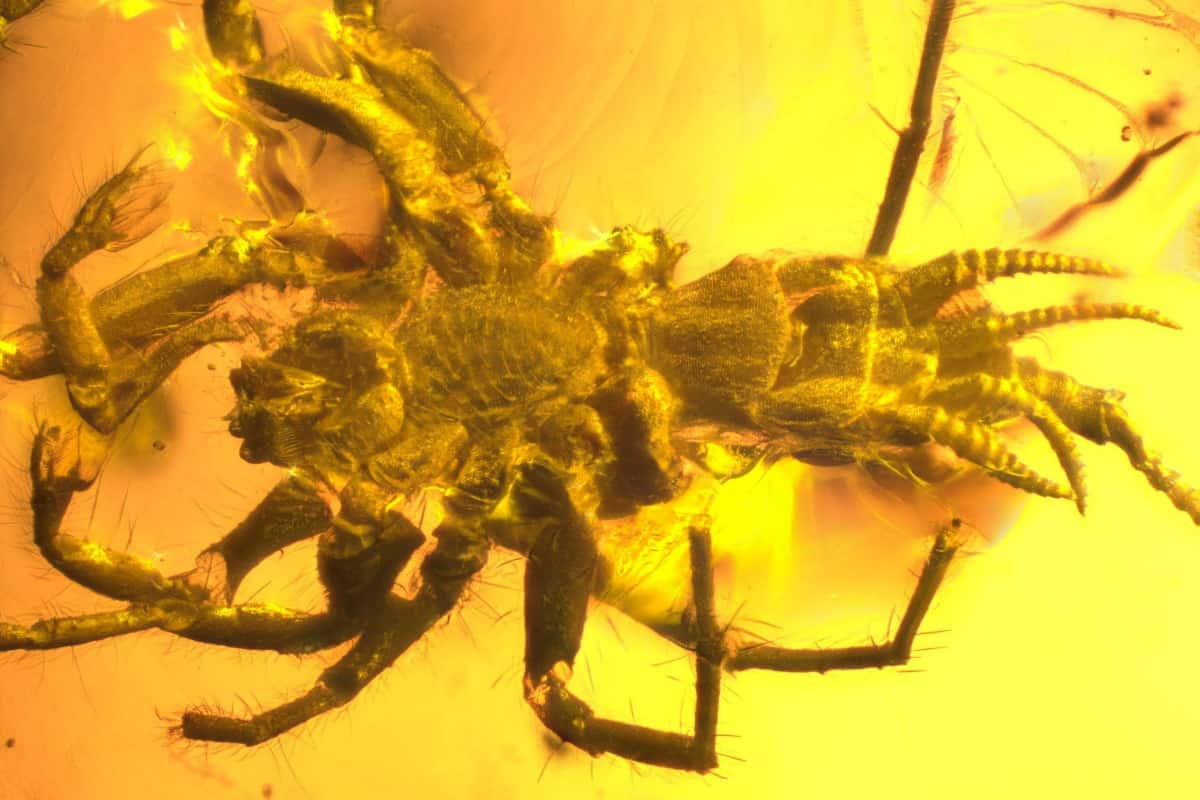 SpiderScorpion featured - Spider or Scorpion? This Prehistoric Beast is Both