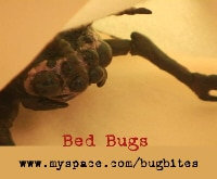 bedbugs - Ti West Fends Off Bedbugs in Brooklyn