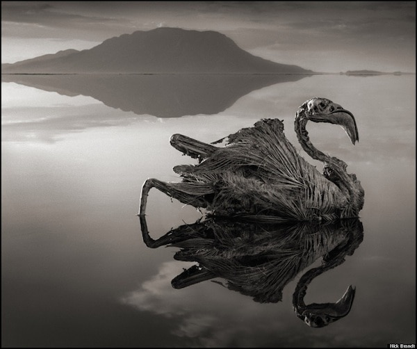 This Deadly Lake Turned Animals Into Statues