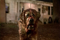 Cujo on Blu-ray (click for larger image)