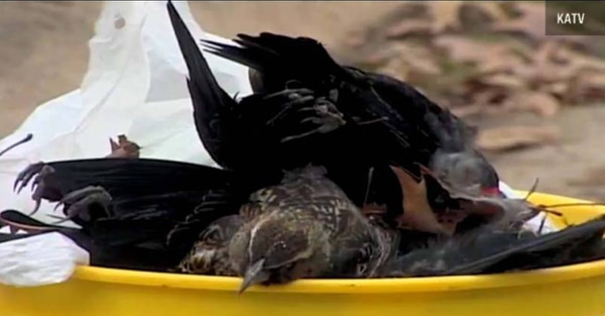 Horror is Arkansas! Thousands of Animals Dead
