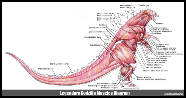 Godzilla Muscle Diagram (click for larger image)