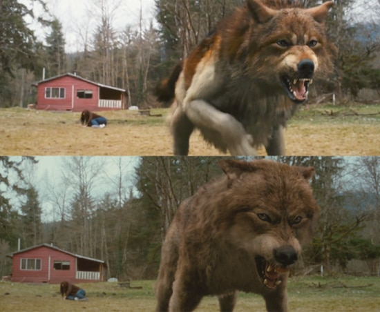 Comparison of Taylor Lautner's Wolf Transformation in New Moon