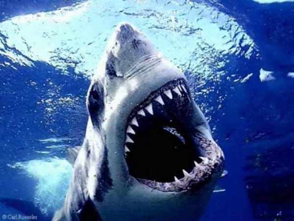 Celebrate Shark Week with the Best Movie Shark Attacks!